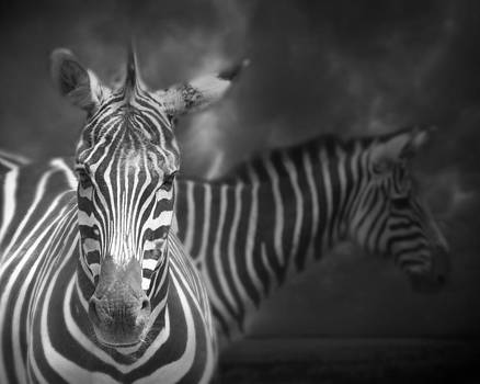 Two Zebras by Irene Suchocki