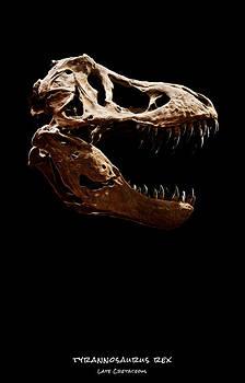 Weston Westmoreland - Tyrannosaurus rex skull 1