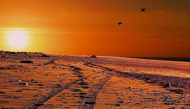 David Rich - Tyre Tracks at Sunset