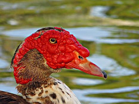 Ugly Duck by David  Brown