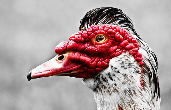 Ugly Duckling by Nichole Carpenter