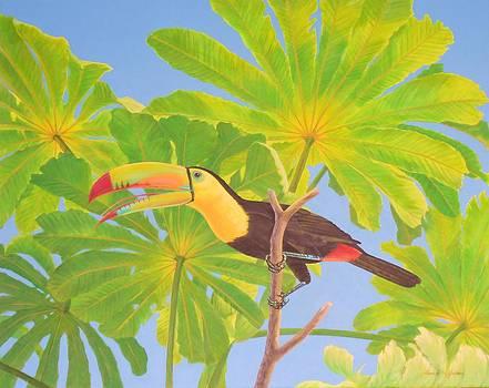 Umbrellaed Toucan   by Bonnie Golden