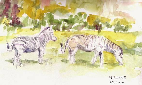 Umfalozi Zebra by David  Hawkins