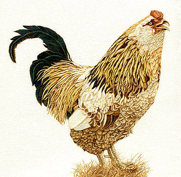 Uncle Tom the Rooster by Cate McCauley