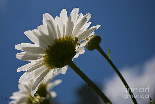 Under Petals by L W