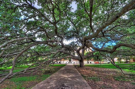 David Morefield - Under the Century Tree
