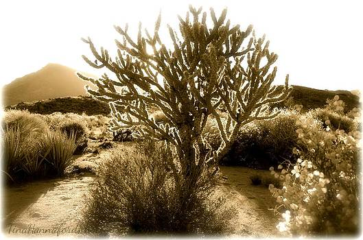 Under the desert by Tina Hannaford
