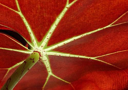 Under the leaf by Dawn Hagar