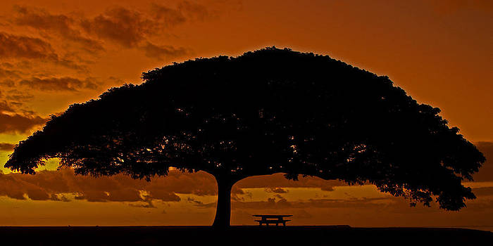 Under The Monkeypod Tree by Brian Governale