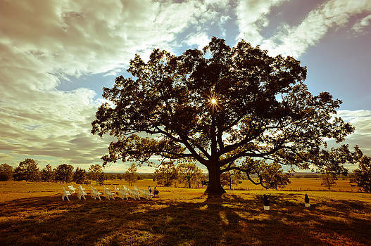 Under The Oak Tree by Scott Slattery