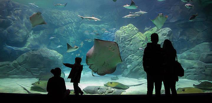 Under The Sea by Julie Jamieson