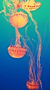 Under The Sea by Lynsie Petig