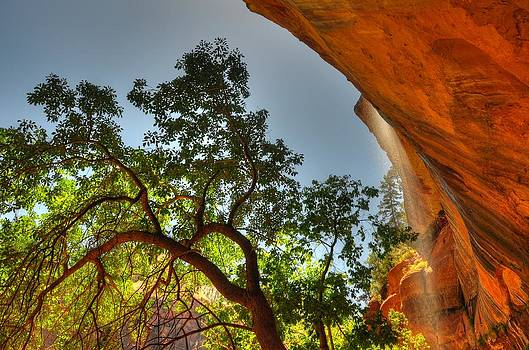 Underneath The Emerald Pools - Zion National Park - Utah by Bruce Friedman