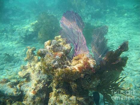 Adam Jewell - Undersea Fans