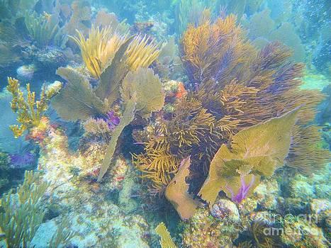 Adam Jewell - Undersea Forest