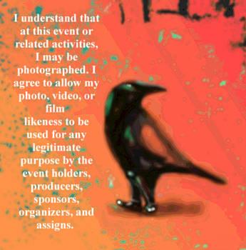 Marcello Cicchini - Understanding corvus