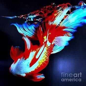Underwater Art by Alejandra Flores