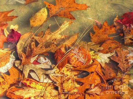 Jaclyn Hughes Fine Art - Underwater Autumn