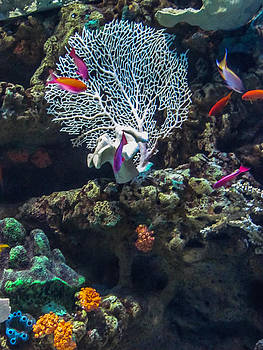 Underwater Colors by Lesley Brindley