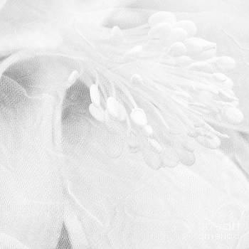 Une Fleur by Stacy Frett
