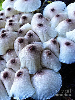 Nancy Stein - Unexpected Shrooms