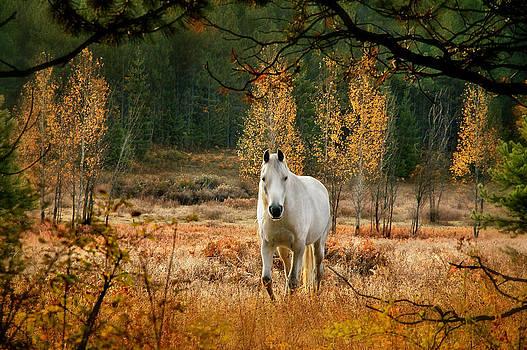 Unicorn Horse by Doug Fredericks