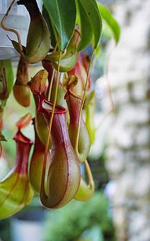 Unique Plants by Jesska Hoff