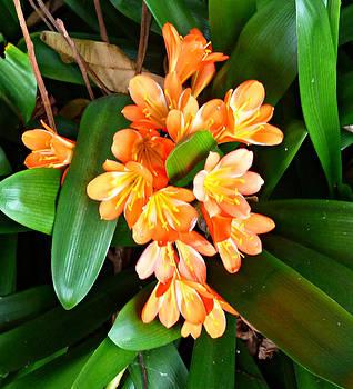 Unknown Wildflowers by Kevin Perandis