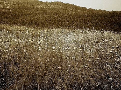 Sandra Pena de Ortiz - Unless The Grain Of Wheat Falls Into The Ground And Dies