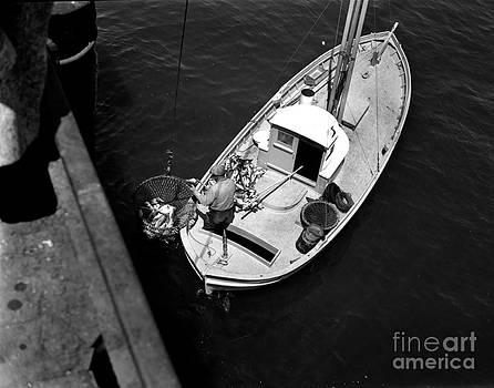 California Views Mr Pat Hathaway Archives - Unloading fish at wharf two Monterey  circa 1950