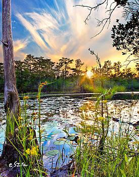 Yellow Wild Flowers Swamp Sunset Blue Sky Reflection Art Prints by Eszra