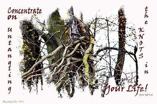 Gena Weiser - Untangle Your Knots