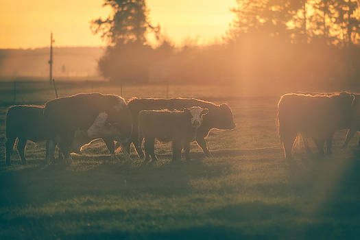 Until the Cows Come Home by Ryan Manuel