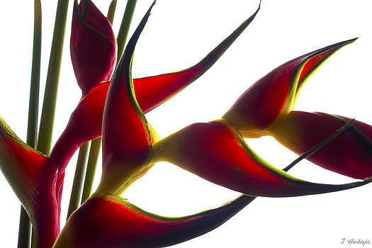 Untitled Floral 2 by Joseph Hedaya