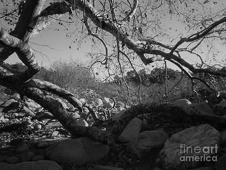 Untitled Photo 3 by Drew Shourd