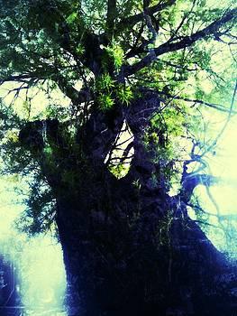 Untitled -Tree Star by Juliann Sweet