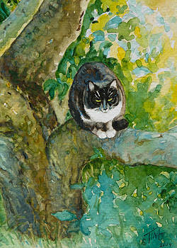 Up a Tree by Tina Welter