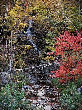 Up State Brook by Jeanne LeMieux