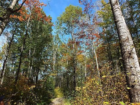 Up The Trail by Gene Cyr