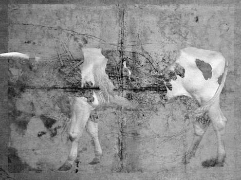 Holy cow by Vladas Orzekauskas