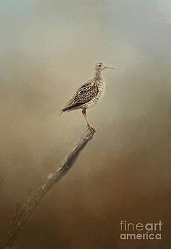 Upland Sandpiper by Pam  Holdsworth