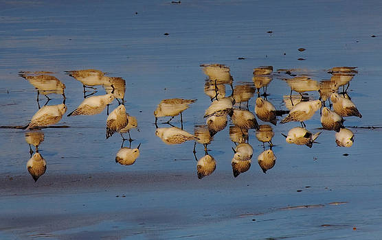 Upsidedown birds by Tony Reddington