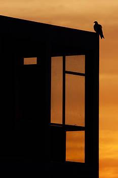 Urban evening by Amit Rawal