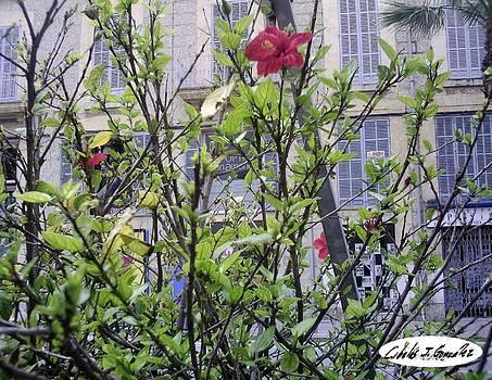 Urban Flowers by Cibeles Gonzalez