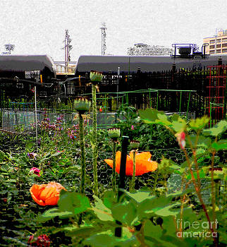 Urban Poppies by Selwa Baroody