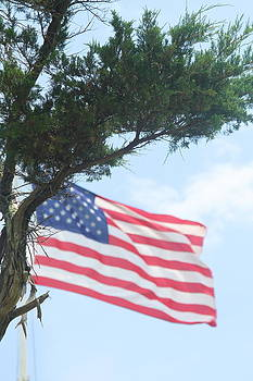 US Flag and Tree by Cathy Lindsey