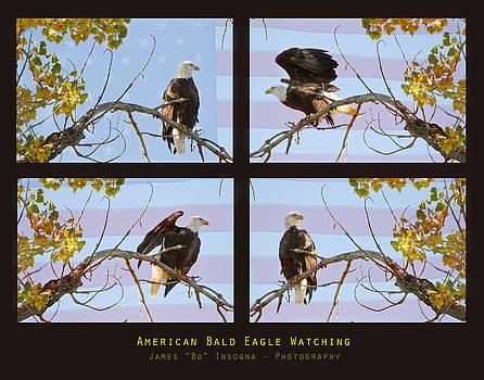 James BO  Insogna - USA American Bald Eagle Watching