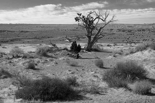 John Daly - Utah Lone Tree