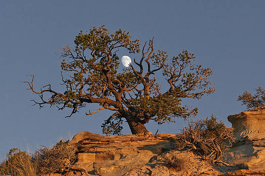 Wes and Dotty Weber - Utah Moon at Sunset