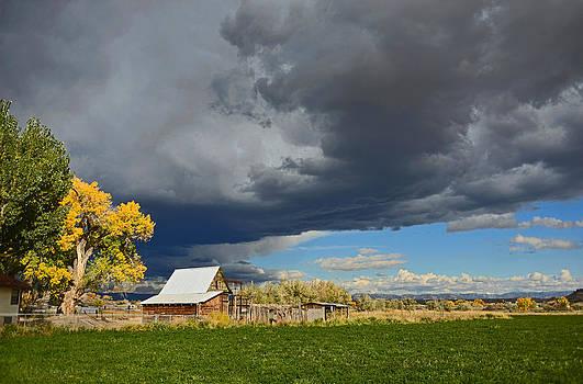 Dana Sohr - Utah Storm 2